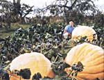 Photograph of Howard Dill posed beside a giant pumpkin in his pumpkin patch