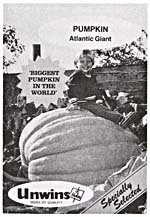 Photograph of a packet of Unwins ATLANTIC GIANT pumpkin seeds featuring a photograph of a little boy sitting on top of a giant pumpkin