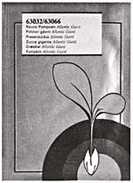 Photograph of a packet of ATLANTIC GIANT pumpkin seeds featuring an illustration of a seedling