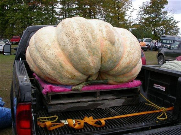 Risultati immagini per giant pumpkins canada