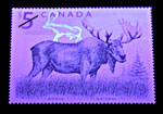 Postage stamp of moose, under UV light