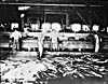 Photograph of Chinese workers cleaning fish, circa 1868-1923