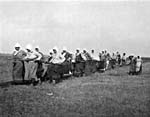 Photograph of a group of Doukhobor women pulling a plough