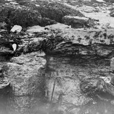Photograph of carboniferous rocks and fossil trees in Nova Scotia, 1879