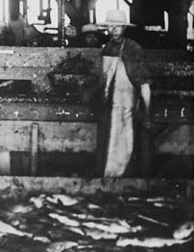 Photograph of back view of four men standing at a counter, with large pile of fish on floor in foreground