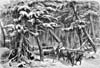 Illustration: Winter lumbering in New Brunswick (early 19th century) involved hauling logs through the woods to the riverbank by oxen