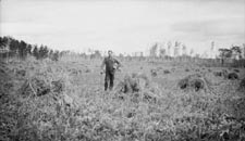 Oats from a new land, Alberta (A Swede homesteader, 1919)