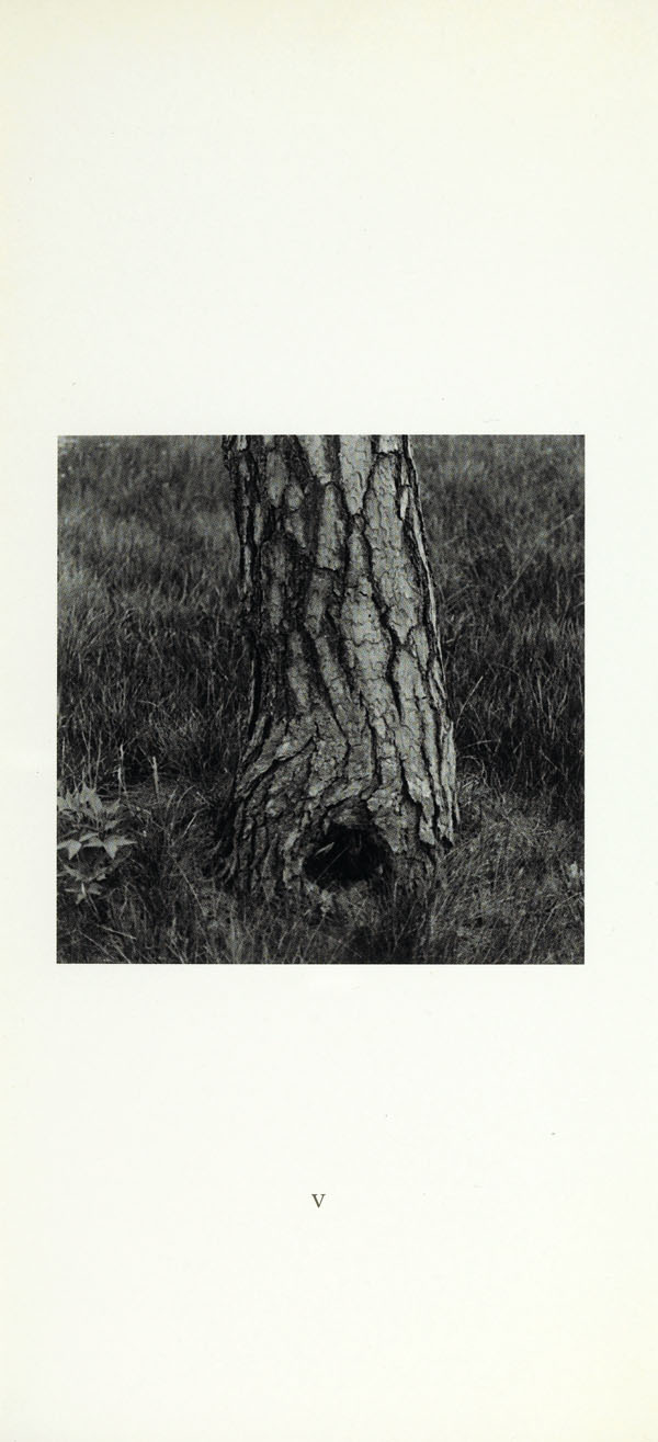 White page with black and white photograph in centre showing an old tree and a grassy field.