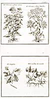 Engraving from book, Engraving from book,HISTOIRE ET DESCRIPTION GENERALE DE LA NOUVELLE FRANCE [. . .]