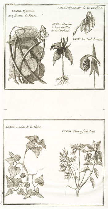 Engraving from book, HISTOIRE ET DESCRIPTION GENERALE DE LA NOUVELLE FRANCE [. . .]