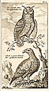 Engraving from book, variant of main image
