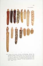 Page 221 of cookbook, IROQUOIS FOODS AND FOOD PREPARATION featuring a colour illustration of varieties of Iroquois corn