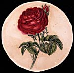 Water colour, RED ROSE, by Susanna Moodie