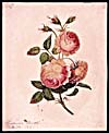 Water colour, PINK ROSES, by Susanna Moodie
