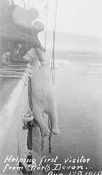 Photograph: Hoisting a polar bear aboard the 'Arctic'